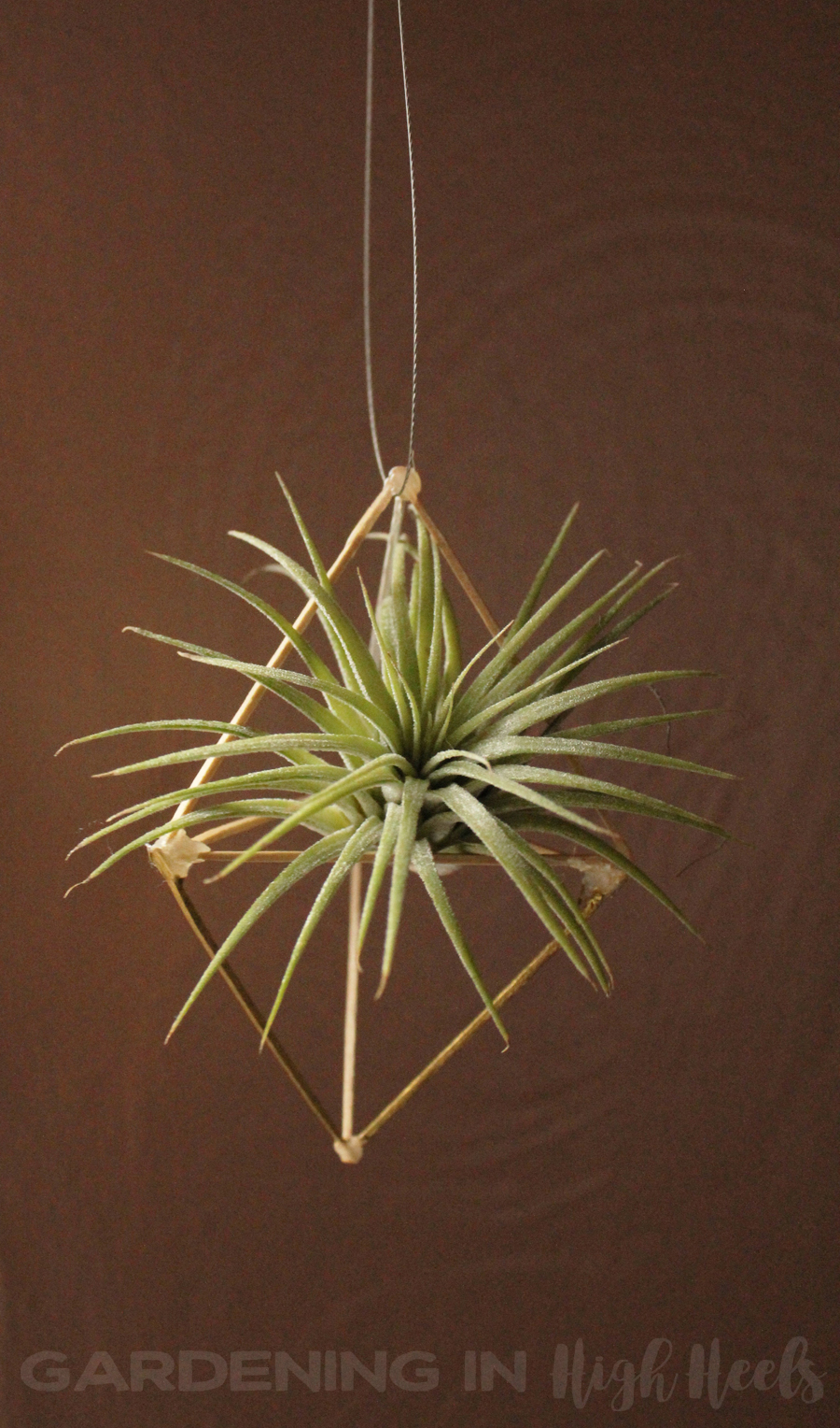 Hanging air plant holder. It was a DIY homemade project using just toothpicks!